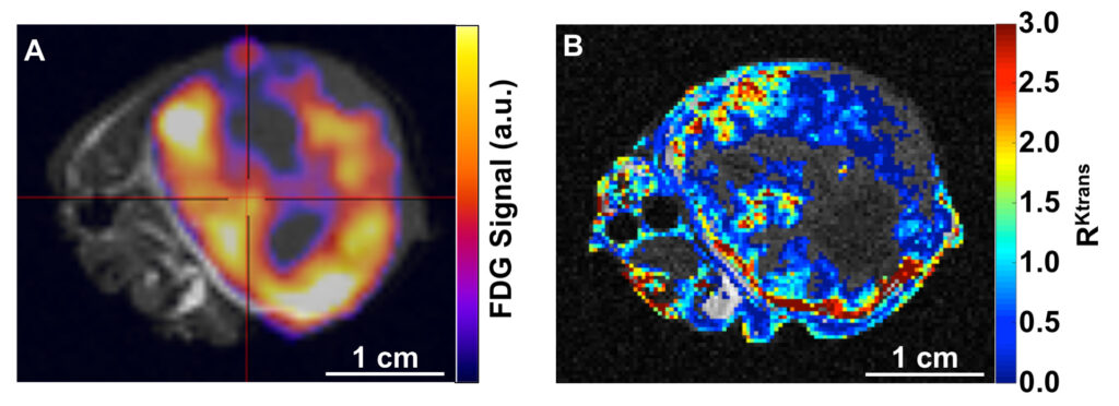 PET/MRI Images of A549 flank tumor in a mouse