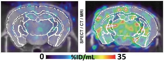 Wild-Type & Alzheimer's Disease Animal Models